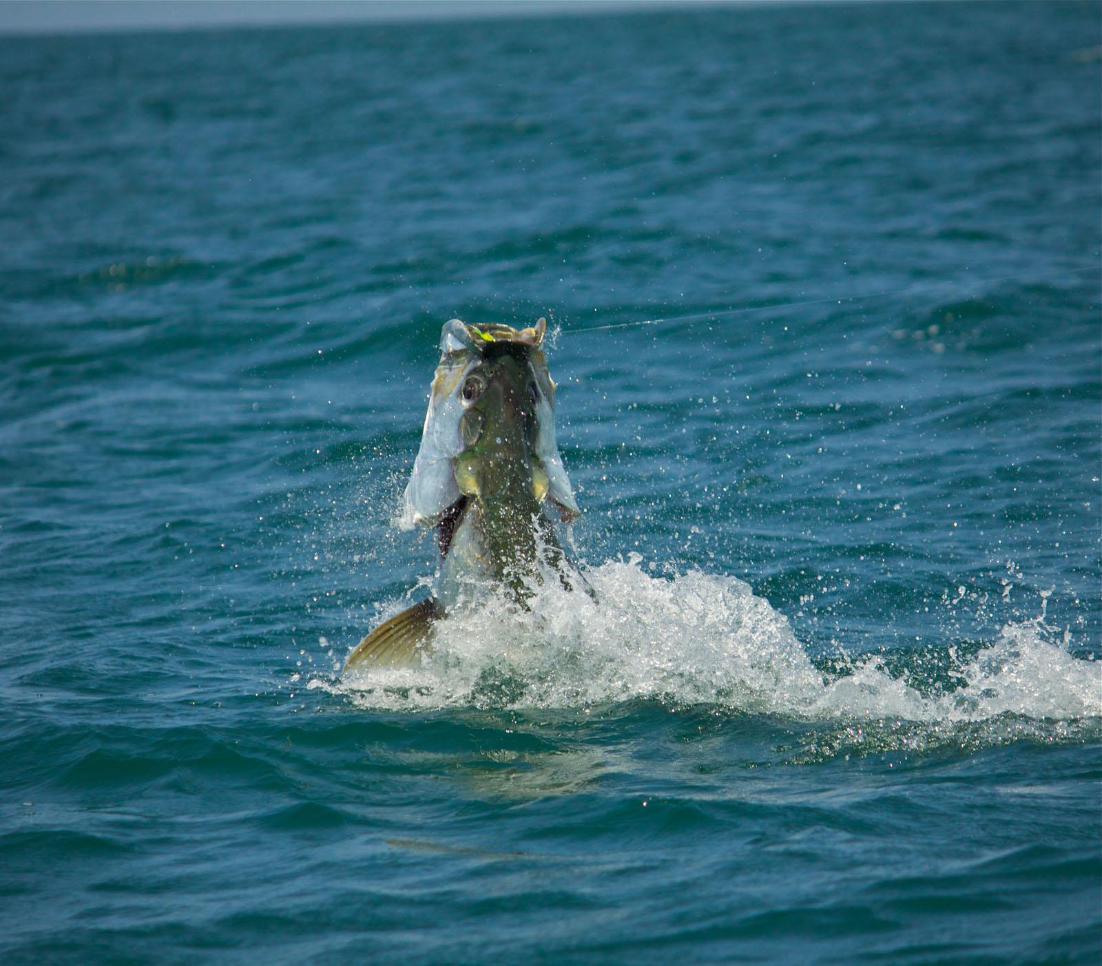 White 39 s tackle shop ft pierce stuart south florida for Whiting fish florida